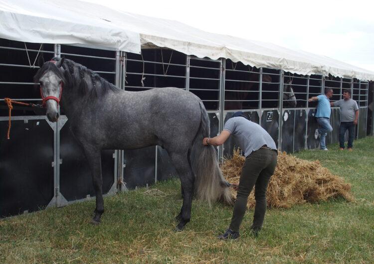 Tot a punt perquè obri l'EquiMollerussa, certamen que marida competició i oci al voltant del món dels cavalls i l'equitació