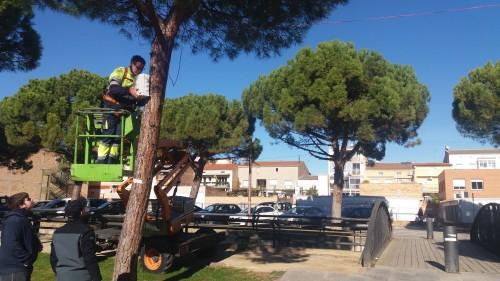 Instal•lació del sistema per dissuadir els estornells a l'avinguda del Canal. FOTO: Ajuntament de Mollerussa.