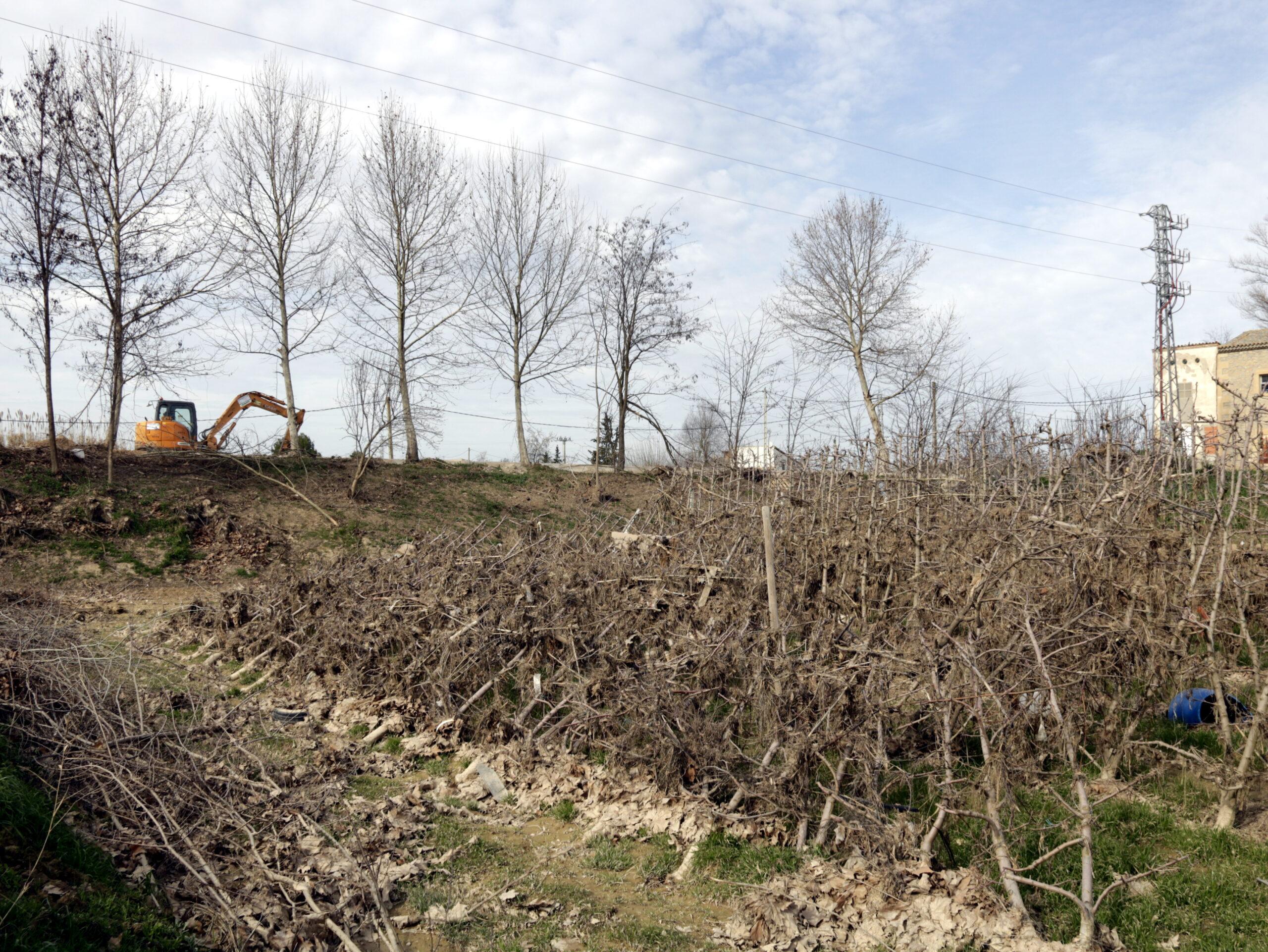 Pla obert on es veu part d'un camp amb arbres fruiters que han quedat greument afectats pels aiguats i, al fons, un tram del Canal Principal a Les Borges Blanques, el 7 de febrer de 2020. (Horitzontal)