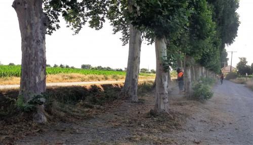 Un operari netejant els marges de la banqueta del Canal d'Urgell. FOTO: Ajuntament de Mollerussa.