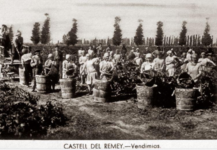 verema-1903