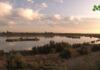 Buidatge parcial de l'estany d'Ivars i Vila-sana per renovar i millorar la qualitat de l'aigua