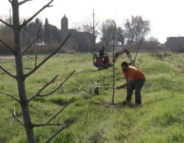 Planten una vuitantena d'arbres per crear i embellir camins al terme municipal d'Ivars d'Urgell