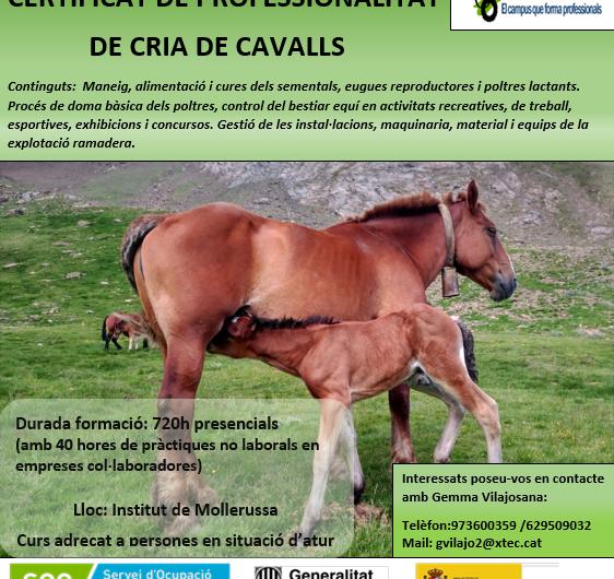 L'Institut Mollerussa ofereix a desocupats formar-se en la restauració de pedra natural o la cria de cavalls