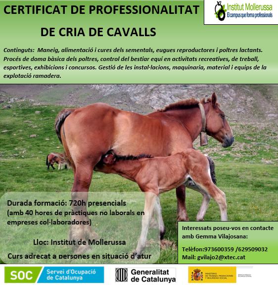 Cria de cavalls (1)