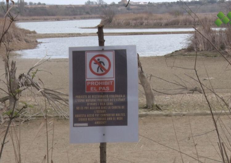 L'estany d'Ivars i Vila-sana continua el seu reompliment i el nivell d'aigua ja ha recuperat uns 35 cm