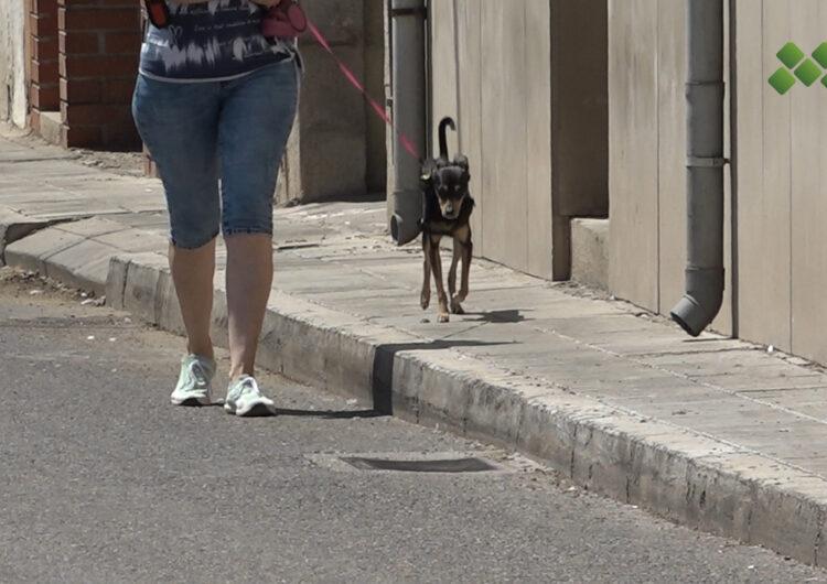 El Pla d'Urgell descarta per ara construir un refugi d'animals comarcal
